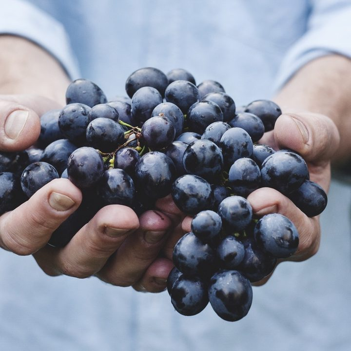 seo-website-grapes